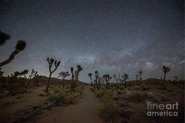 Thru Photograph - Night Hike Thru Joshua Tree  by Michael Ver Sprill