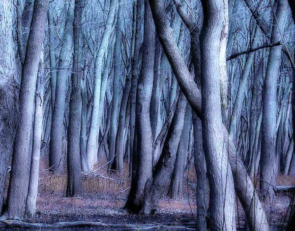 Photograph - Night In The Woods by Coleman Mattingly