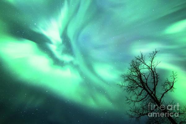 Photograph - Night Lights by Lori Dobbs