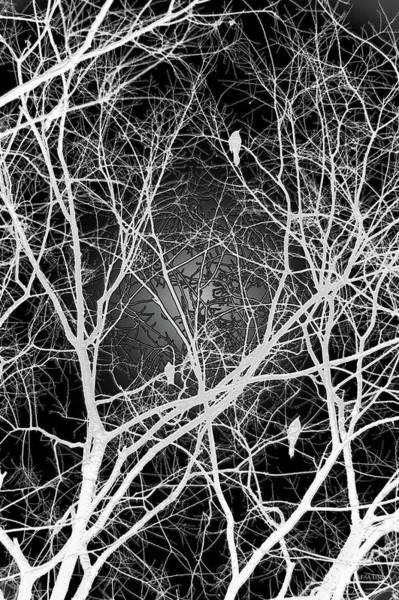 Photograph - Night Nesting by Lesa Fine