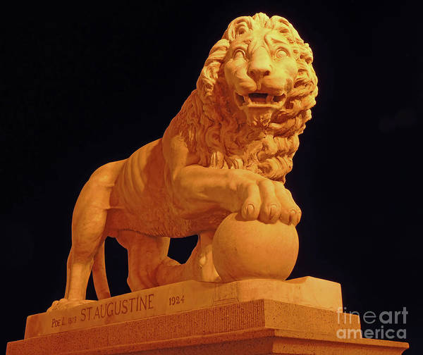 Wall Art - Photograph - Night Of The Lion by D Hackett