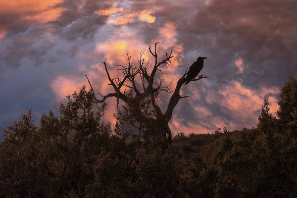 Photograph - Night Of The Raven by Boyce Fitzgerald