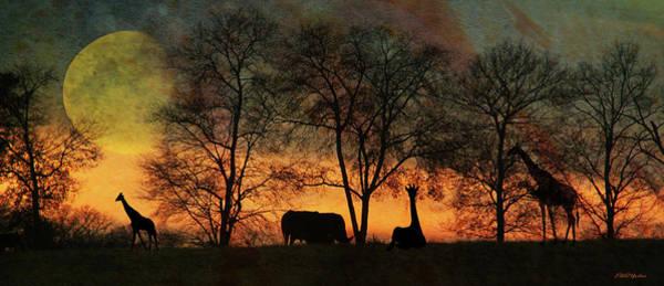 Photograph - Night On The Sahara by Ericamaxine Price