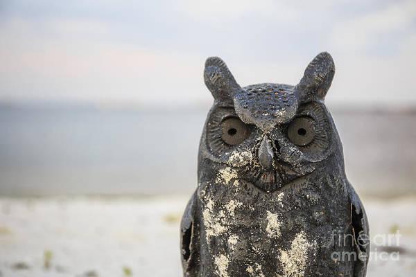 Photograph - Night Owl by Edward Fielding