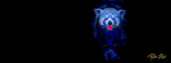Photograph - Night Panda by Rikk Flohr