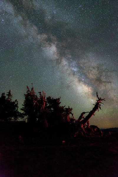 Wall Art - Photograph - Night Pines At Crater Lake by Cat Connor