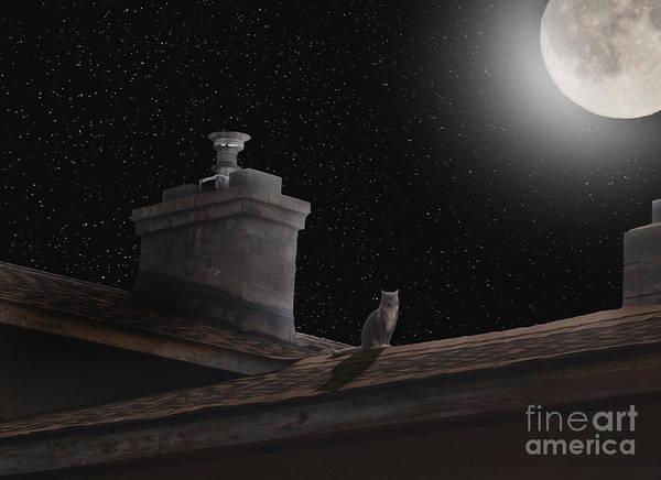 Photograph - Night Prowler by Vivian Martin