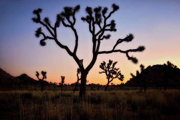 Palm Desert Photograph - Night Silhouette  by Nicki Frates