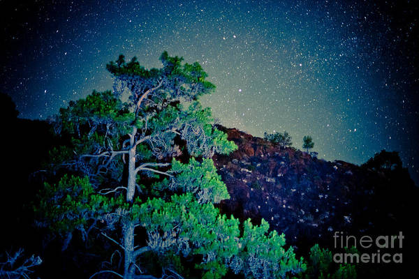 Photograph - Night Sky Scene With Pine And Stars Artmif.lv by Raimond Klavins