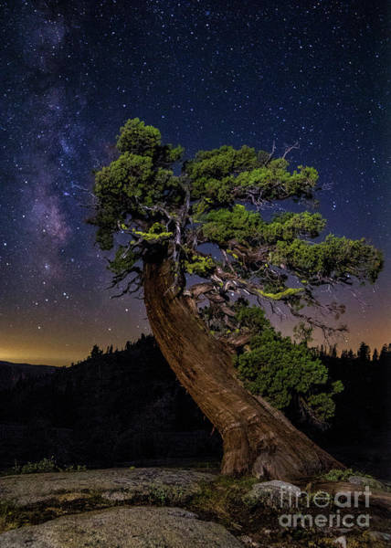 Photograph - Night Sky  by Vincent Bonafede