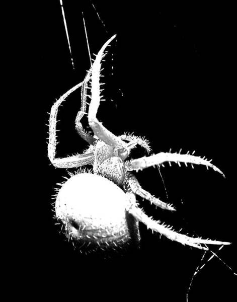 Photograph - Night Spider by Scott Cordell
