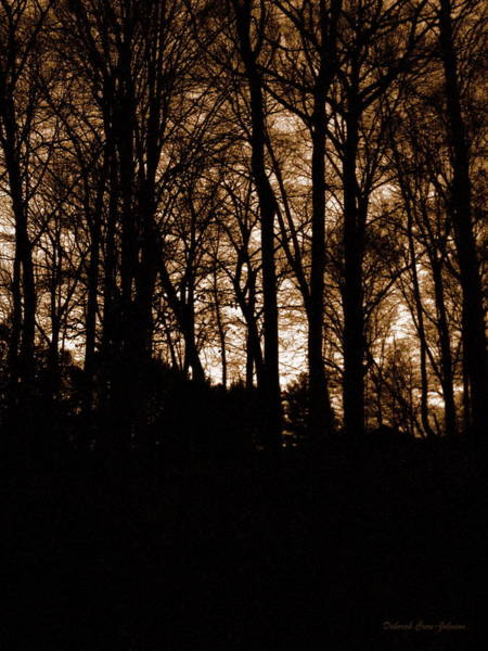 Foilage Photograph - Night Trees by Deborah  Crew-Johnson