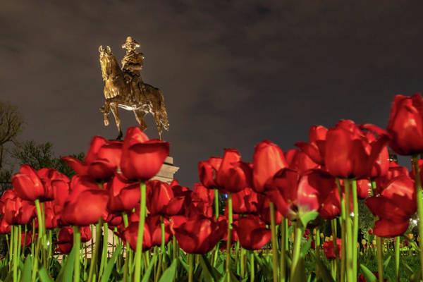 Photograph - Night Tulips At The Public Garden by Kristen Wilkinson