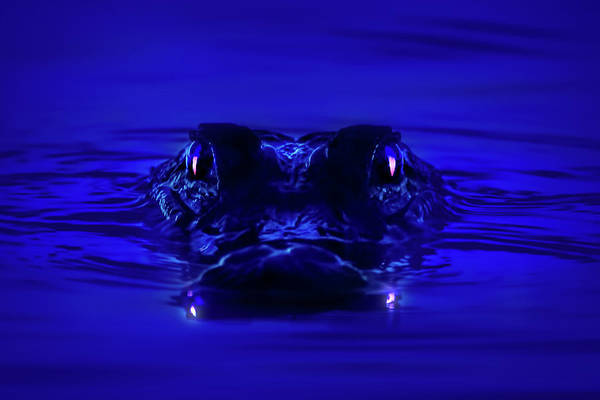 Gator Wall Art - Photograph - Night Watcher by Mark Andrew Thomas