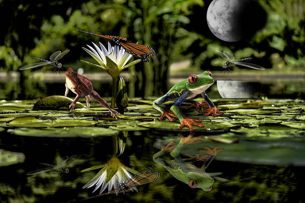 Photograph - Nightlife On A Moonlit Pond by Ericamaxine Price