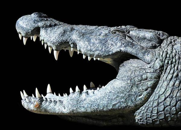 Photograph - Nile Croco-smile by Debi Dalio