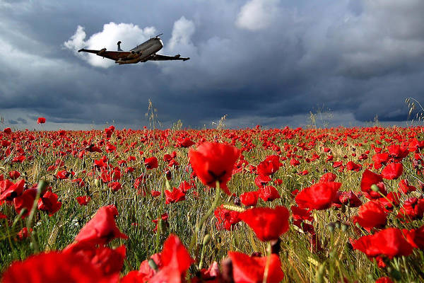 Remembrance Photograph - Nimrod Respects by Smart Aviation