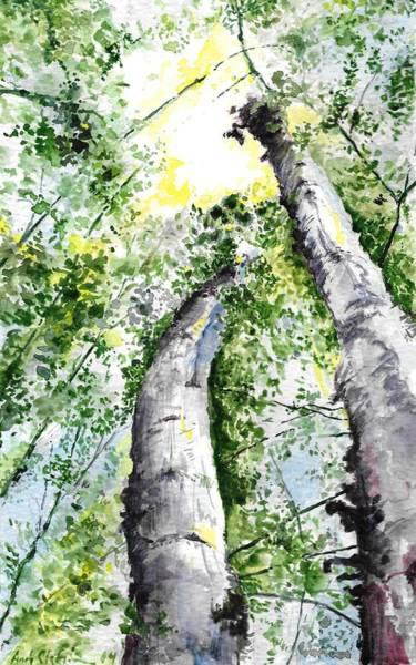 Up North Painting - Nine Mile Birch by Andrew Claflin