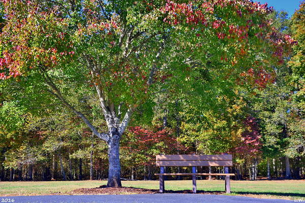 Photograph - Ninety Six National Historic Site Bench In Autumn  by Lisa Wooten
