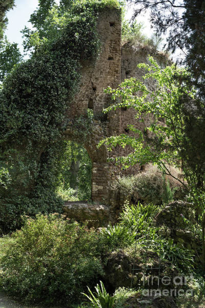 Photograph - Ninfa Garden, Rome Italy 2  by Perry Rodriguez
