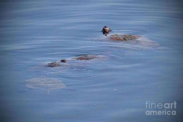 Photograph - Ninja Turtles by Jim Garrison
