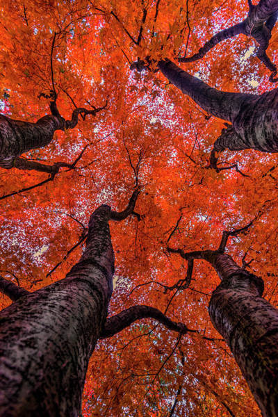 Wall Art - Photograph -  Nishinomiya Japanese Garden - Autumn Trees by Mark Kiver