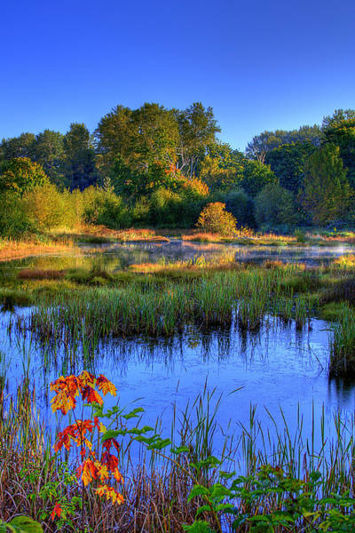 Photograph - Nisqually Pond by David Patterson