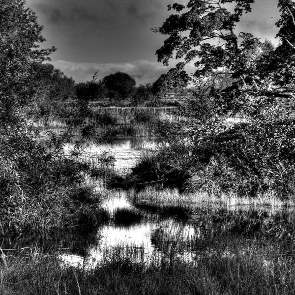 Photograph - Nisqually Ponds by David Patterson