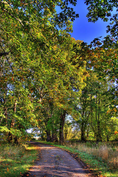 Photograph - Nisqually Road by David Patterson