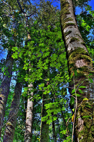 Photograph - Nisqually Trees by David Patterson