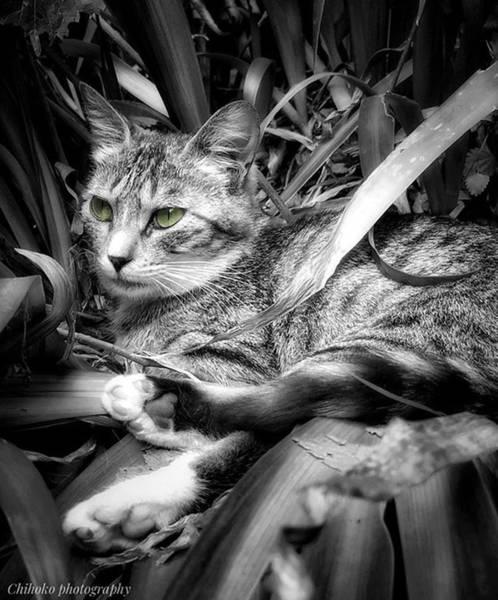 "Tachi Photograph - . . Japan 2:20pm. . . ""the Role by Chihoko Tachi"