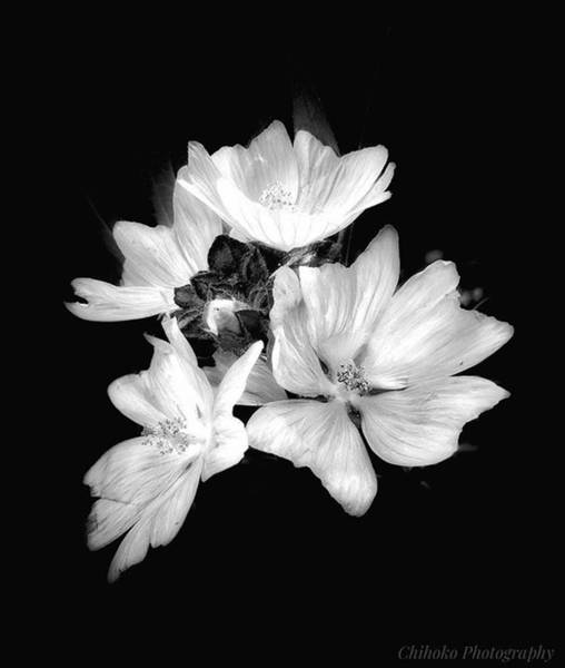 "Tachi Photograph - . . Japan 4:43pm. . ""malva by Chihoko Tachi"