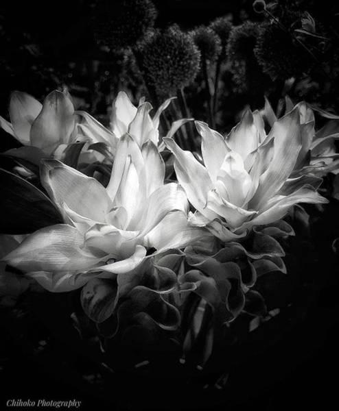 "Tachi Photograph - . . Tokyo 5:57pm. . ""curcuma by Chihoko Tachi"