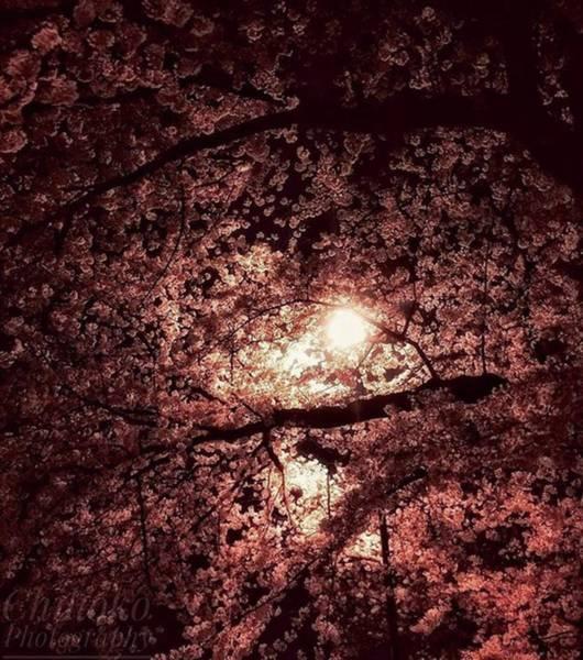 "Tachi Photograph - . . Tokyo 6:44pm. . ""notturno Op by Chihoko Tachi"