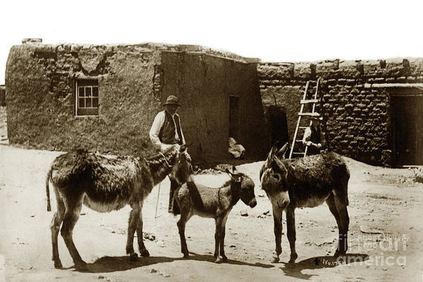Photograph - Adobe Houses And Burros  No. 1754.  Circa 1885 by California Views Archives Mr Pat Hathaway Archives