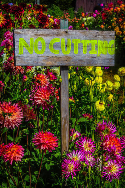 Wall Art - Photograph - No Cutting Sign In Garden by Garry Gay