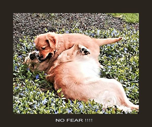 Photograph - No Fear by John Feiser