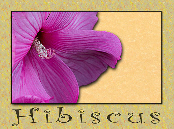 Photograph - Hibiscus by Patti Deters