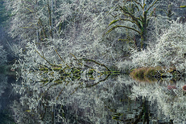 Photograph - No Leaves by Robert Potts