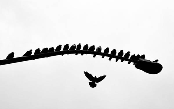 Photograph - No Place To Land by AJ Schibig