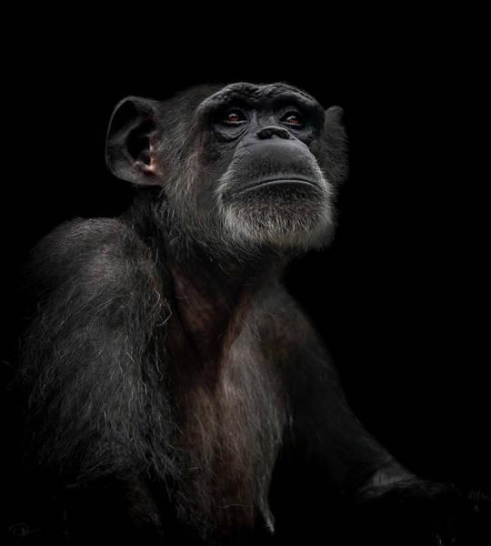 Primate Photograph - Noble by Paul Neville