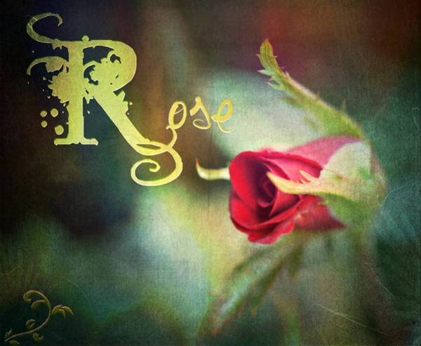 Wall Art - Photograph - Nocturnal Rose by Kathy Bucari