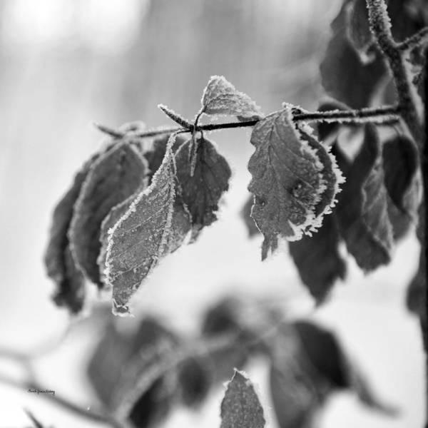 Photograph - Noiselessness by Randi Grace Nilsberg
