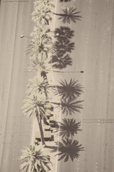 Photograph - Noon Palms by Alice Gipson