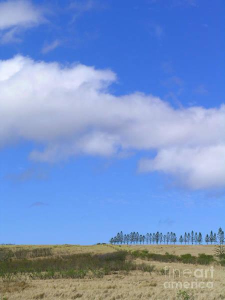 Norfolk Pine Wall Art - Photograph - Norfolk Island Pine by James Temple