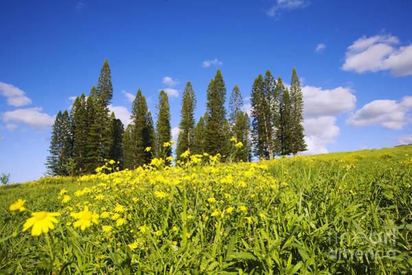 Norfolk Pine Wall Art - Photograph - Norfolk Landscape by Ron Dahlquist - Printscapes