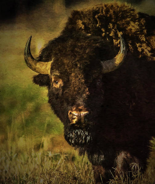 Photograph - North American Buffalo by Lou Novick