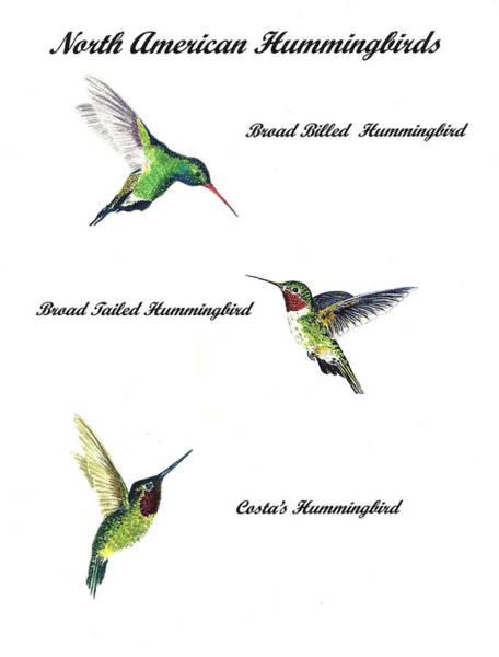 Wall Art - Painting - North American Hummingbirds by Michael Vigliotti