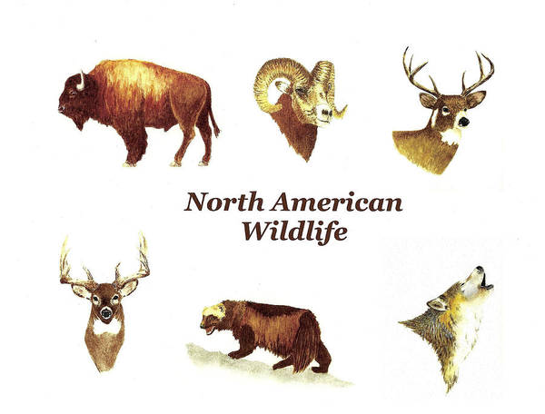 Wall Art - Painting - North American Wildlife by Michael Vigliotti