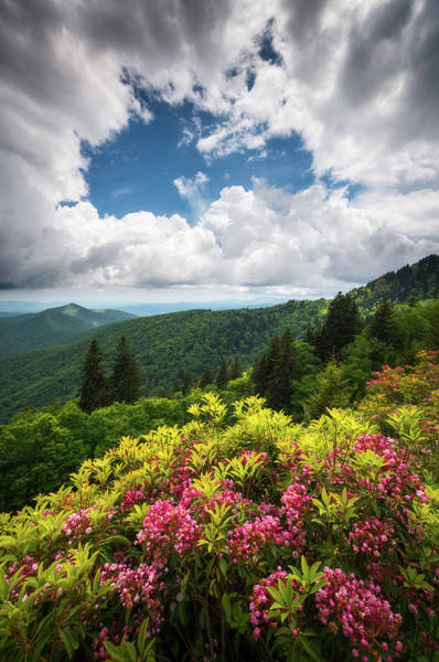 Appalachian Mountains Photograph - North Carolina Appalachian Mountains Spring Flowers Scenic Landscape by Dave Allen